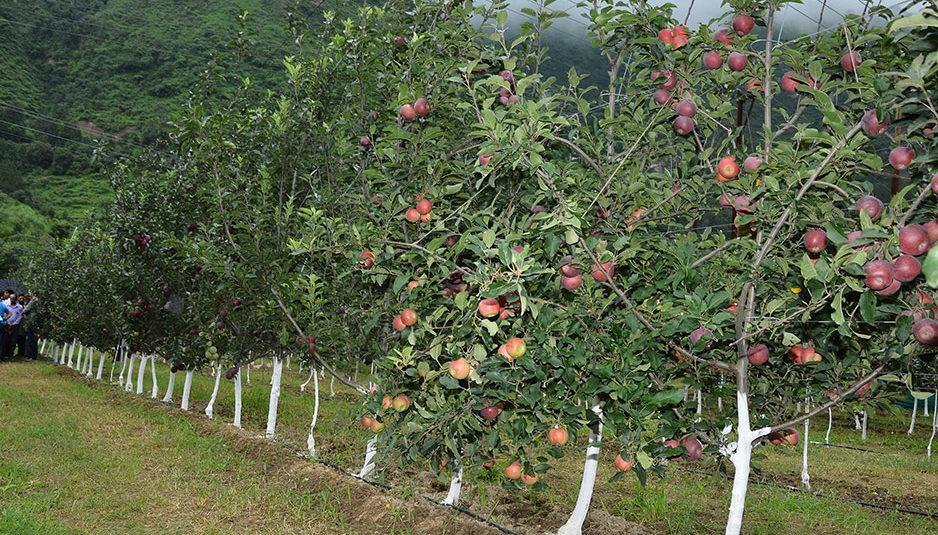 वैज्ञानिकों ने कराया किसानों को सेब के उच्च घनत्व वाले वृक्षारोपण के पहलुओं से अवगत