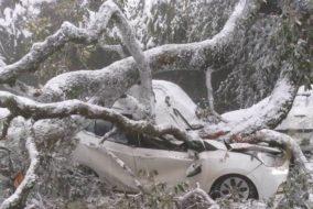 शिमला: कार पर गिरा पेड़, हादसे के दौरान कार सवार थे गाड़ी से बाहर