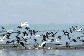 """पोंग झील वन्य प्राणी अभयारण्य में पहली बार मनाया """"पक्षी महोत्सव"""", इस वर्ष पोंग डैम झील में पाए गए 114 विभिन्न प्रजातियों के 1,15,701 पक्षी"""
