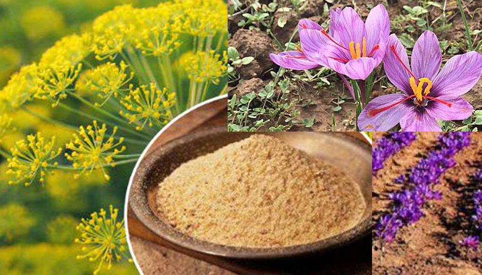 प्रदेश में हींग व केसर की खेती के लिए 'कृषि से संपन्नता' योजना शुरू