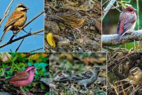 वन्यप्राणी विशेषज्ञ संतोष ने शिमला में सर्दियों में आने वाली पक्षी प्रजातियों की 10 प्रजातियांकी रिपोर्ट