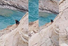 """स्पीति के हुरलिंग में दिखा विलुप्त हिमालयन """"सिरो"""" वन्यप्राणी मंडल स्पीति की टीम ने बनाई वीडियो क्लिप"""