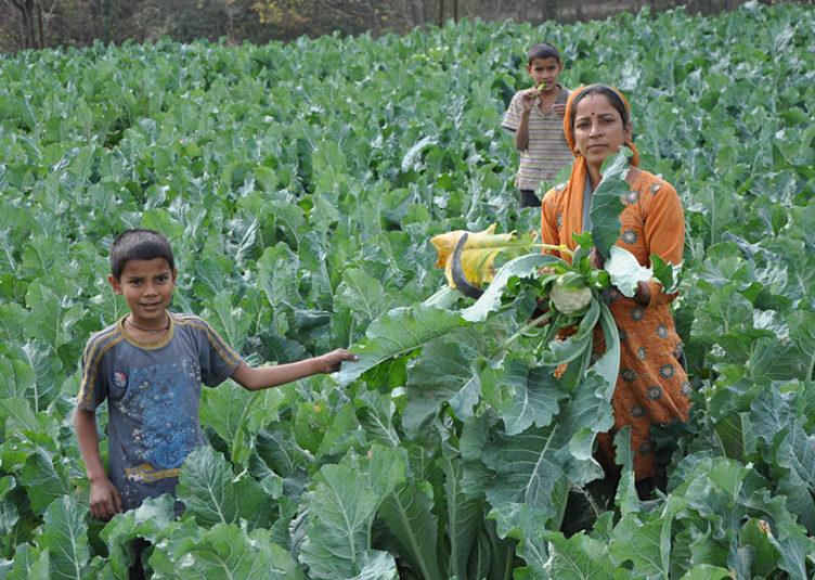 """फसलों को नुकसानसे बचाने के लिए """"कृृृषि उत्पादन संरक्षण योजना"""" : डाॅ.पटियाल"""